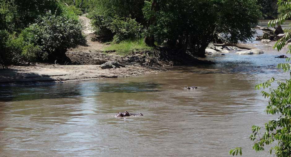 Krokodil & Nilpferde in der Serengeti