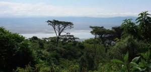 Kraterrand des Ngorongoro