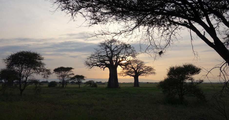 Sonnenuntergang im Tarangire Nationalpark