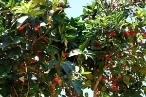 Gewürztour auf Sansibar